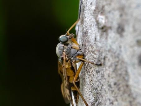 Insekt (Makro)