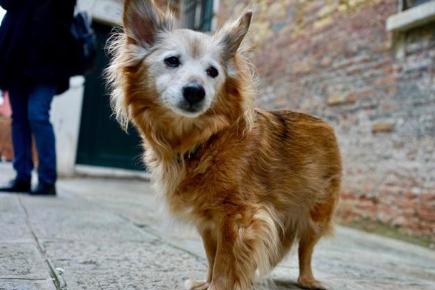 Gasthund
